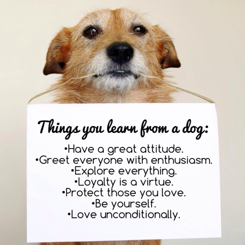 Things learned from a dog